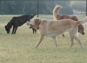 6-27-09 Jewel goldens